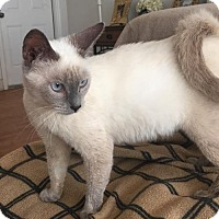 Adopt A Pet :: Keanu - Pembroke Pines, FL