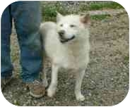 Siberian Husky/German Shepherd Dog Mix Dog for adoption in Makinen, Minnesota - Tasha