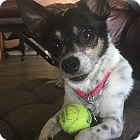 Adopt A Pet :: Tess - Scottsdale, AZ