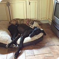 Adopt A Pet :: Tiny - Boonton, NJ