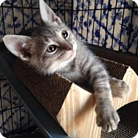 Adopt A Pet :: Lettie - Jenkintown, PA