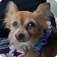 Adopt A Pet :: Loki aka  Lucky - Hazlet, NJ