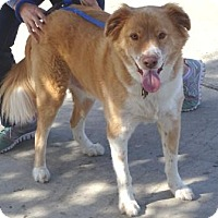 Adopt A Pet :: Max - Lathrop, CA