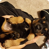 Adopt A Pet :: Kiara - Lima, PA