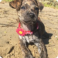 Adopt A Pet :: Gwen - Long Beach, CA