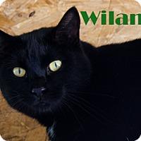 Adopt A Pet :: Wilana - Hamilton, MT