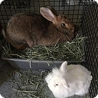 Adopt A Pet :: Gloria & Fritz - Bonita, CA