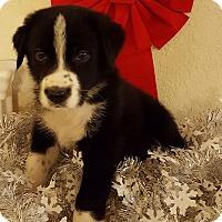 Adopt A Pet :: JAKE - Fort Atkinson, WI