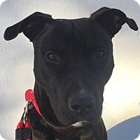 Adopt A Pet :: Raider - Beverly Hills, CA
