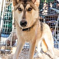 Adopt A Pet :: Pali - Seattle, WA