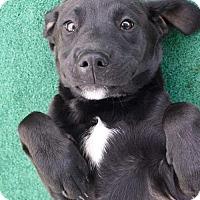 Adopt A Pet :: Casey - Bradenton, FL