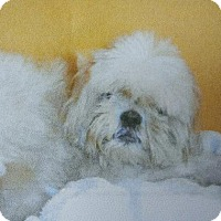 Adopt A Pet :: Chicho - Oakland Park, FL
