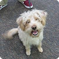 Adopt A Pet :: Rusty - Santa Ana, CA