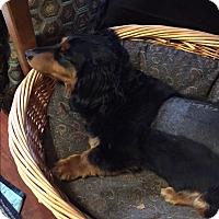 Adopt A Pet :: Heath - Decatur, GA