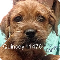 Adopt A Pet :: Quincey - baltimore, MD