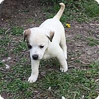 Adopt A Pet :: Caden - PENDING - kennebunkport, ME