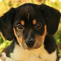 Adopt A Pet :: Baldwin - Brattleboro, VT
