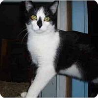 Adopt A Pet :: Duster - Hamburg, NY
