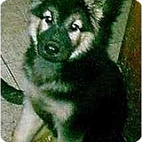 Adopt A Pet :: Rebecca - dewey, AZ
