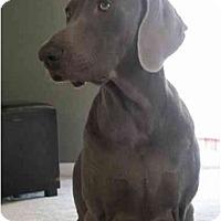 Adopt A Pet :: Lexi  **ADOPTED** - Eustis, FL
