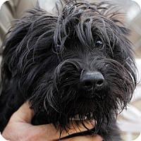 Adopt A Pet :: Ozzy - Athens, GA