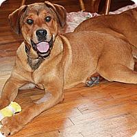 Adopt A Pet :: Dale - Franklin, TN