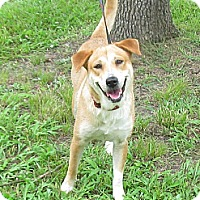 Adopt A Pet :: Dixie - Kingwood, TX