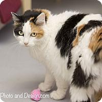 Adopt A Pet :: Phoebe - Fountain Hills, AZ
