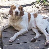 Adopt A Pet :: Trigger - Little River, SC