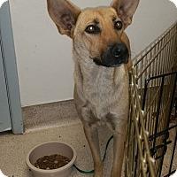 Adopt A Pet :: Tessa - Scottsdale, AZ