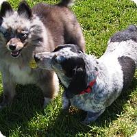 Adopt A Pet :: Jared - Prole, IA