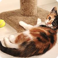 Adopt A Pet :: Kyra - Speonk, NY