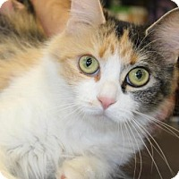 Adopt A Pet :: Debra - Caistor Centre, ON