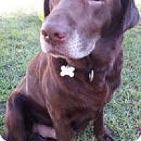 Adopt A Pet :: Dunncan - Torrance, CA
