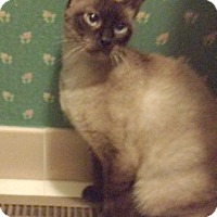 Adopt A Pet :: Cinders - Devon, PA