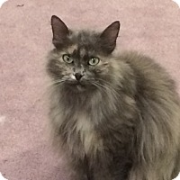 Adopt A Pet :: Moggy - Buffalo, WY