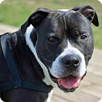 Adopt A Pet :: Jeb - Troy, MI