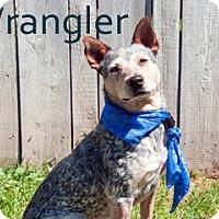 Adopt A Pet :: Wrangler - Hamilton, MT