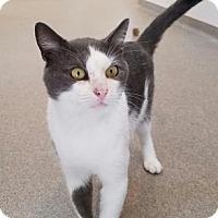 Adopt A Pet :: Killian - Peace Dale, RI
