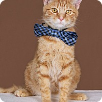 Adopt A Pet :: Opie - Huntington, WV