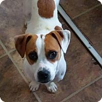Adopt A Pet :: K-C - Tonawanda, NY