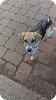 Beagle/Hound (Unknown Type) Mix Dog for adoption in Staten Island, New York - Greta Sweet Beagle