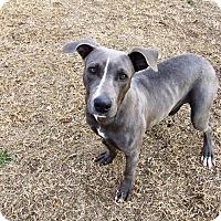 Adopt A Pet :: Baby - Watauga, TX