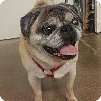 Adopt A Pet :: Nicholas - Gardena, CA