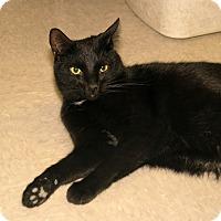Adopt A Pet :: Utopia - Milford, MA