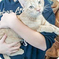 Adopt A Pet :: Sampson - Coppell, TX