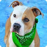 Adopt A Pet :: DOC - Louisville, KY