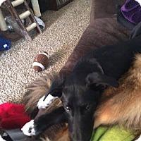 Adopt A Pet :: Dallas - Meridian, ID