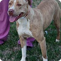 Adopt A Pet :: Callie **BEYOND URGENT** - Columbia, TN