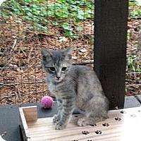 Adopt A Pet :: Brie - Monroe, GA